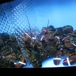 07 lobster tank 150x150 CMJ Day 4: Kelloggs Fancy Pants