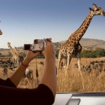 04 Giraffe Car South Africa 150x150 South African Tourism Pics