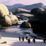 05 Boulders Beach Penguins South Africa 150x150 South African Tourism Pics