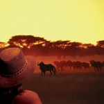 10 wildebeest South Africa 150x150 South African Tourism Pics