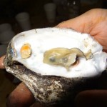13 Oyster Roast - Chicago Food Film Festival