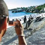 13 PENGUINS Retouch FLAT - South Africa