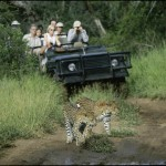 14 Safari - South Africa