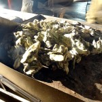 20 Oyster Roast - Chicago Food Film Festival