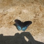 08 Noel butterfly 150x150 Tio Wally Eats America: Noel, Missouri, Rio Grande Mexican Restaurant